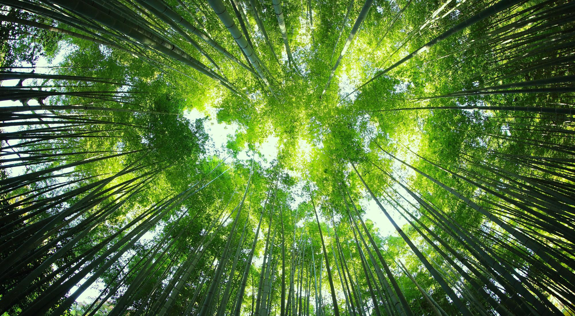International Biodiversity Consultants - Ecosystem Services